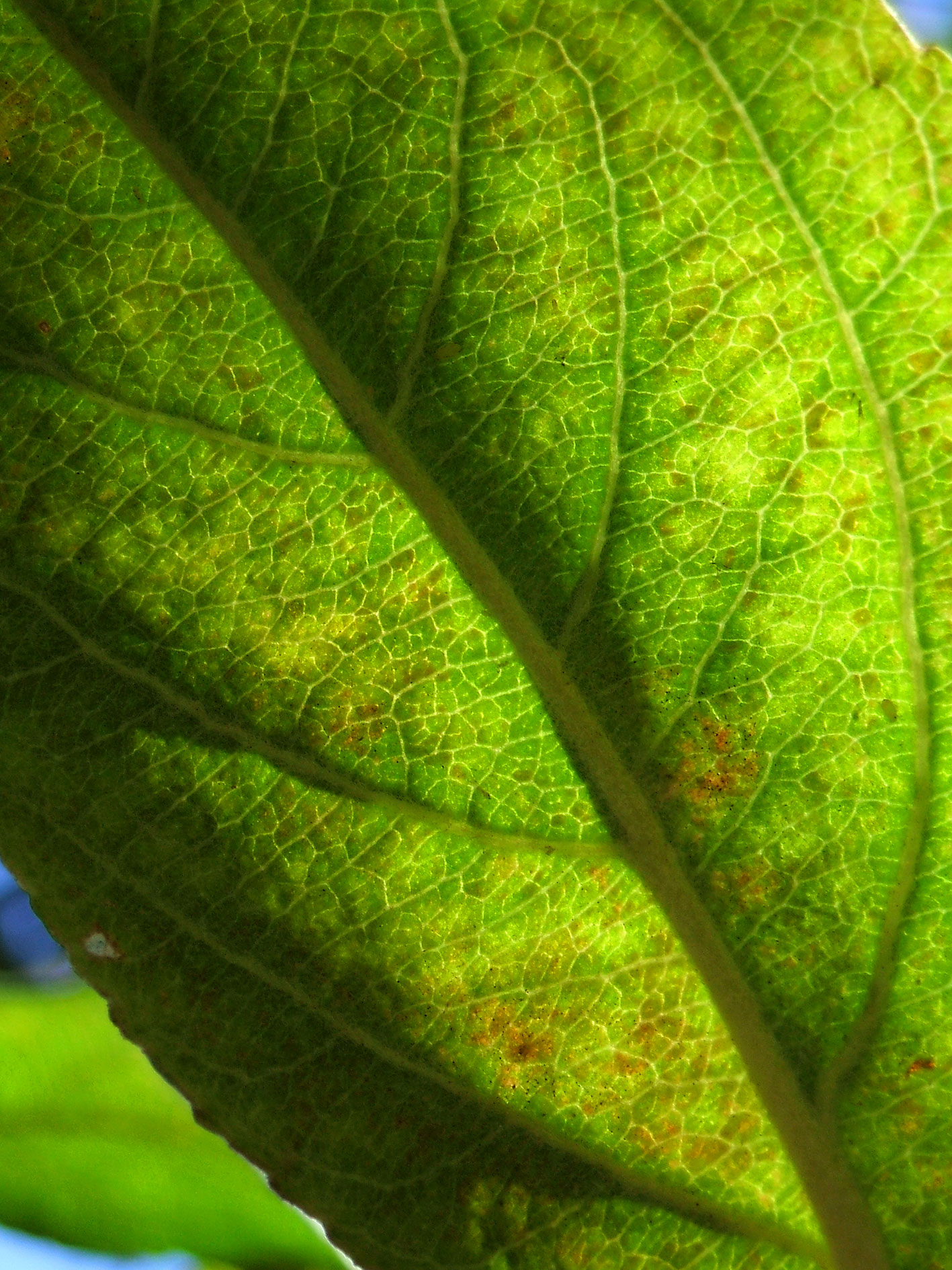 hoja verde web posada rural lindos suenos cantabria